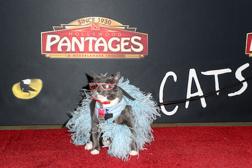 Sunglasses Cat attends 'Cats' opening night, Pantages Theatre, Los Angeles, USA